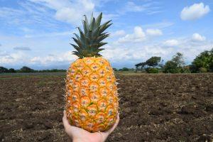 ¿Sabes cómo conservar tus frutas y verduras?