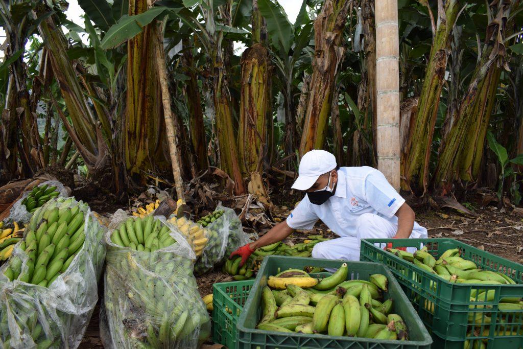 Responsabilidad Social y Desperdicio de Alimentos